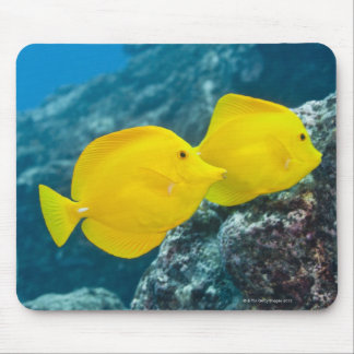 A Pair of Yellow Tangs Mouse Pad