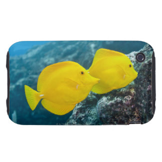A Pair of Yellow Tangs Tough iPhone 3 Covers