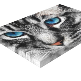 A-PAL 12x8 Silver Tabby Cat with Blue Eyes Stretched Canvas Print