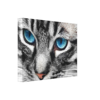 A-PAL 24x18 Silver Tabby Cat with Blue Eyes Canvas Print