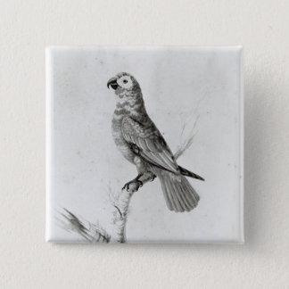 A Parrot, 1786 15 Cm Square Badge