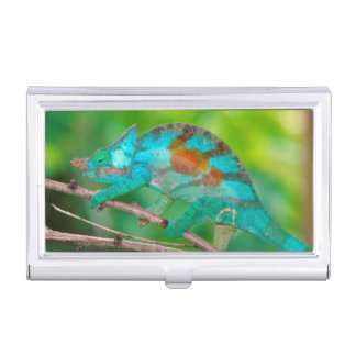 A Parson's Chameleon moving along a branch 2 Business Card Holder