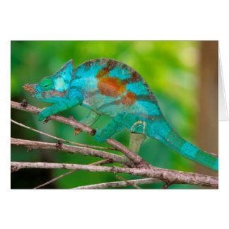 A Parson's Chameleon moving along a branch 2 Card