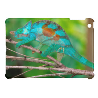 A Parson's Chameleon moving along a branch 2 Cover For The iPad Mini