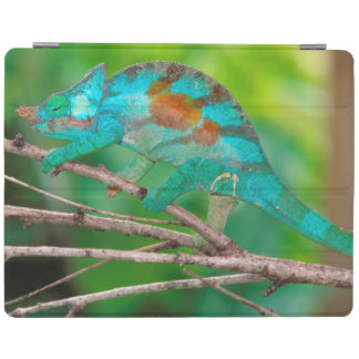 A Parson's Chameleon moving along a branch 2 iPad Cover