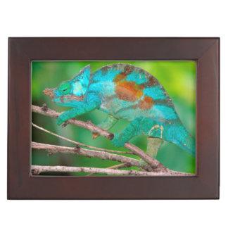 A Parson's Chameleon moving along a branch 2 Keepsake Box