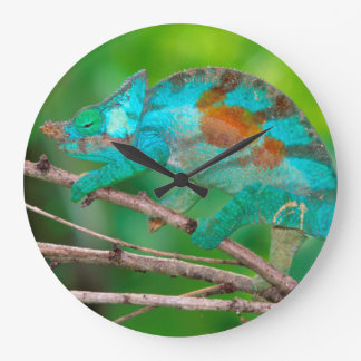 A Parson's Chameleon moving along a branch 2 Large Clock