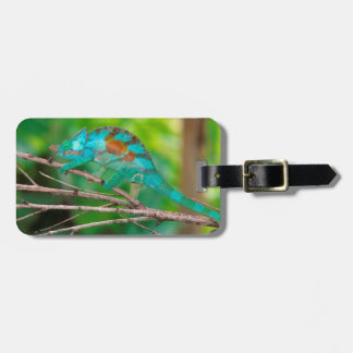 A Parson's Chameleon moving along a branch 2 Luggage Tag