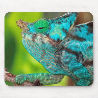 A Parson's Chameleon moving along a branch Mouse Mat