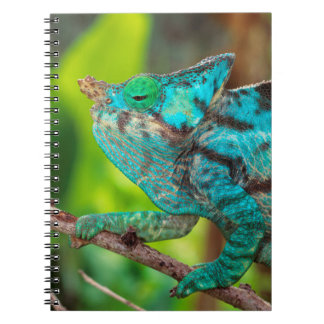 A Parson's Chameleon moving along a branch Notebooks