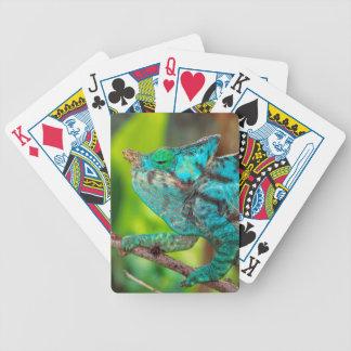 A Parson's Chameleon moving along a branch Poker Deck