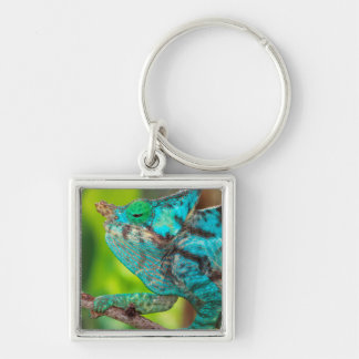 A Parson's Chameleon moving along a branch Silver-Colored Square Key Ring
