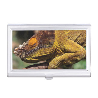 A Parson's Chameleon perched on a branch Business Card Holder