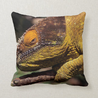 A Parson's Chameleon perched on a branch Cushion