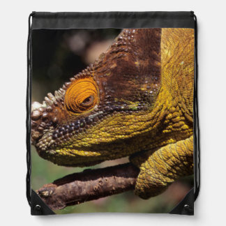 A Parson's Chameleon perched on a branch Drawstring Bag