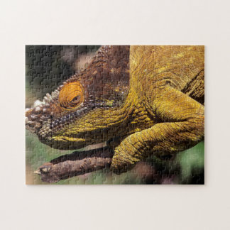 A Parson's Chameleon perched on a branch Jigsaw Puzzle
