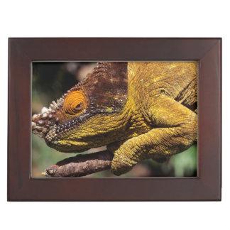 A Parson's Chameleon perched on a branch Keepsake Box