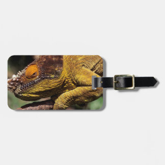 A Parson's Chameleon perched on a branch Luggage Tag