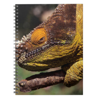 A Parson's Chameleon perched on a branch Spiral Notebook