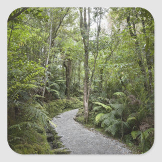 A path through a rain forest at the base of square sticker