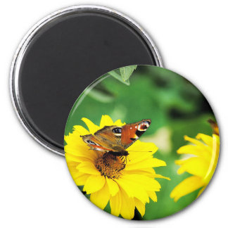 A peacock butterfly - Magnet