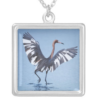 A pecular hybrid of the dark and white morphs of silver plated necklace