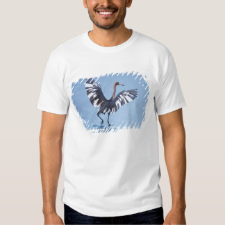 A pecular hybrid of the dark and white morphs of tee shirt