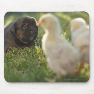 A Pekinese puppy on the grass. Mouse Pad