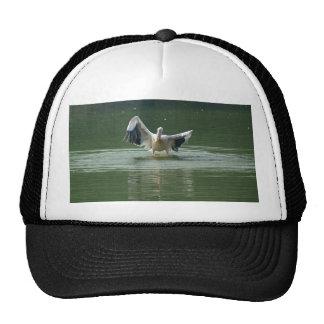 A pelican drying its wings trucker hat
