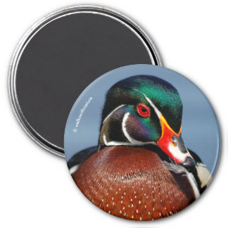 A Pensive Wood Duck Drake 7.5 Cm Round Magnet