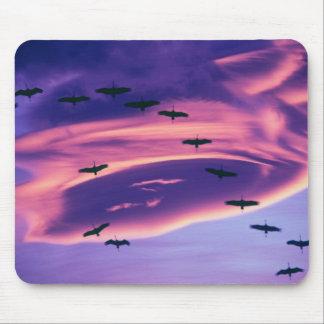 A photo composite of Sandhill cranes in flight Mouse Mat