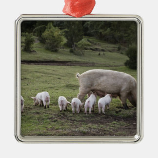 A pig with piglets in a field christmas ornament