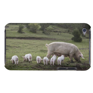 A pig with piglets in a field iPod Case-Mate case