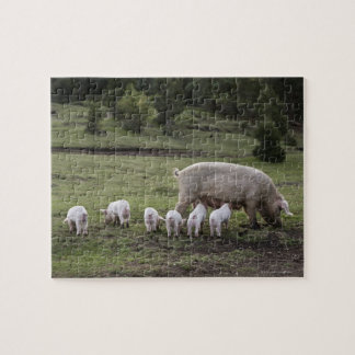 A pig with piglets in a field puzzles