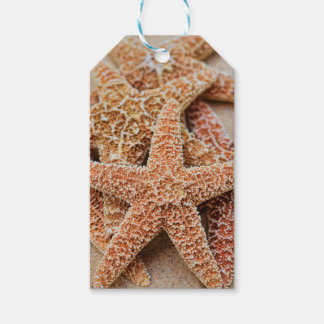 A Pile of Large Sugar Starfish