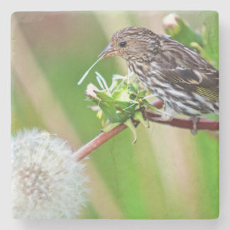 A Pine Siskin (Carduelis Pinus) pecks seeds from Stone Beverage Coaster