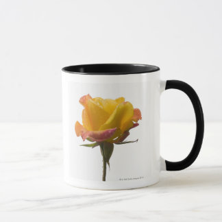 A pink and yellow rose after an afternoon rain mug