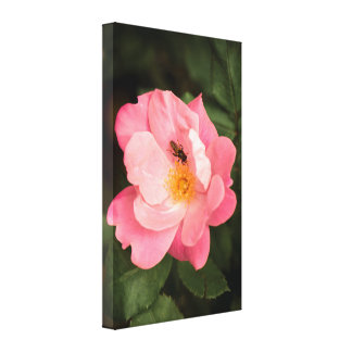 A pink rose and the fly insect canvas print