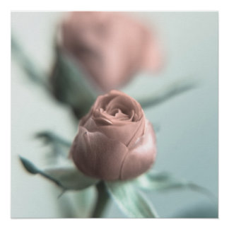 A Pink Rose for your Sweetheart...
