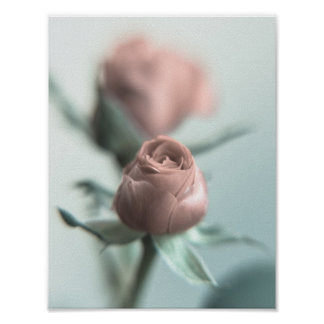 A Pink Rose for your Sweetheart... Poster