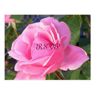 A Pink Rose, RSVP Postcard