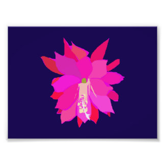 A Pink Tropical Flower on Navy Background Photographic Print