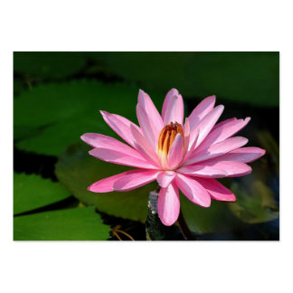 A pink water lily pack of chubby business cards