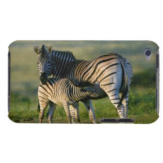 A Plains Zebra feeding her foal, Kwazulu-Natal Case-Mate iPod Touch Case