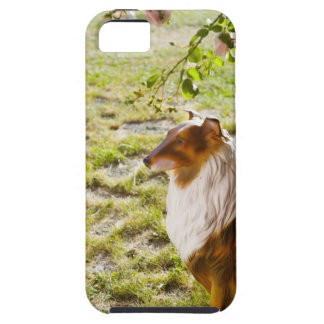 A plastic dog in a garden. iPhone 5 cover