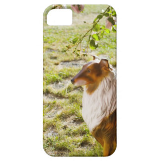 A plastic dog in a garden. iPhone 5 covers