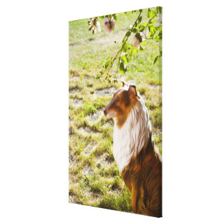 A plastic dog in a garden. gallery wrapped canvas
