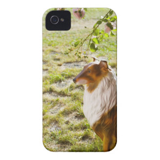 A plastic dog in a garden. iPhone 4 Case-Mate case