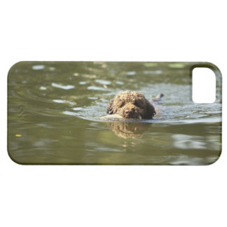 A playful dog cools off in the summer heat. barely there iPhone 5 case