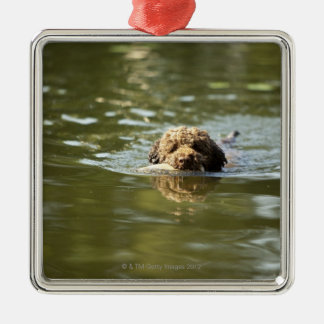 A playful dog cools off in the summer heat. christmas ornament